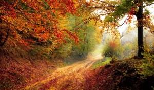 Traumdeutung Wald